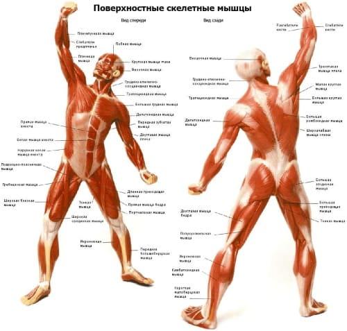 влияние массажа